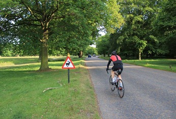 Cycling route in Richmond Park
